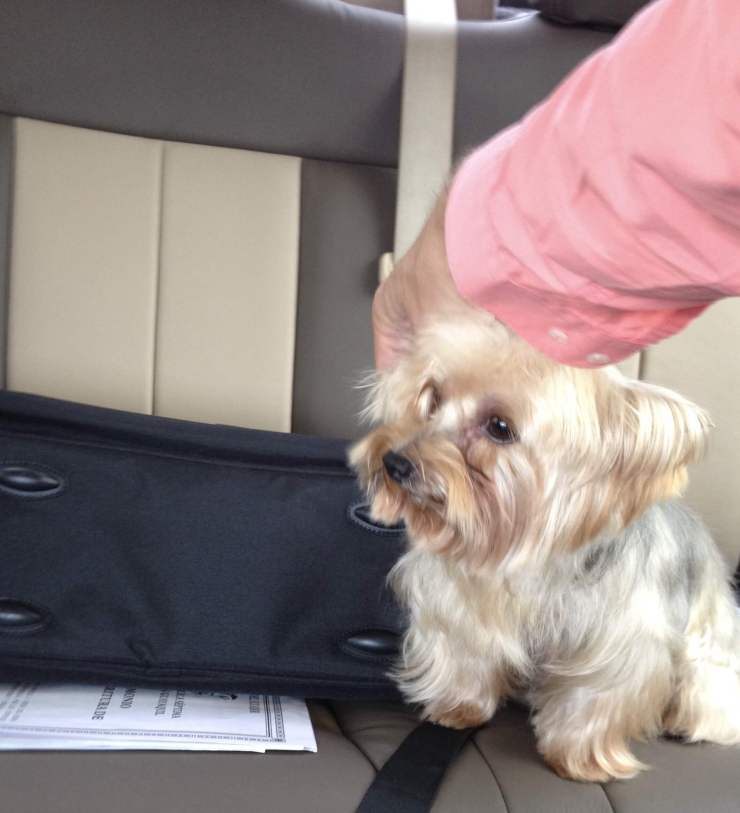 yorkshire terrier products, AMER EXPERIENCE