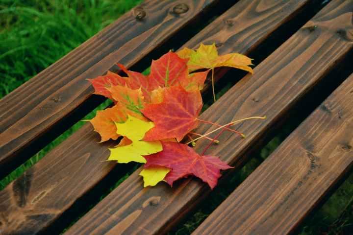 fall-foliage-maple-leaves-autumn-colours-emerge-226007.jpeg