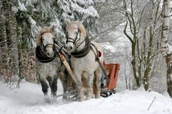 sleigh-ride-horses-the-horse-winter