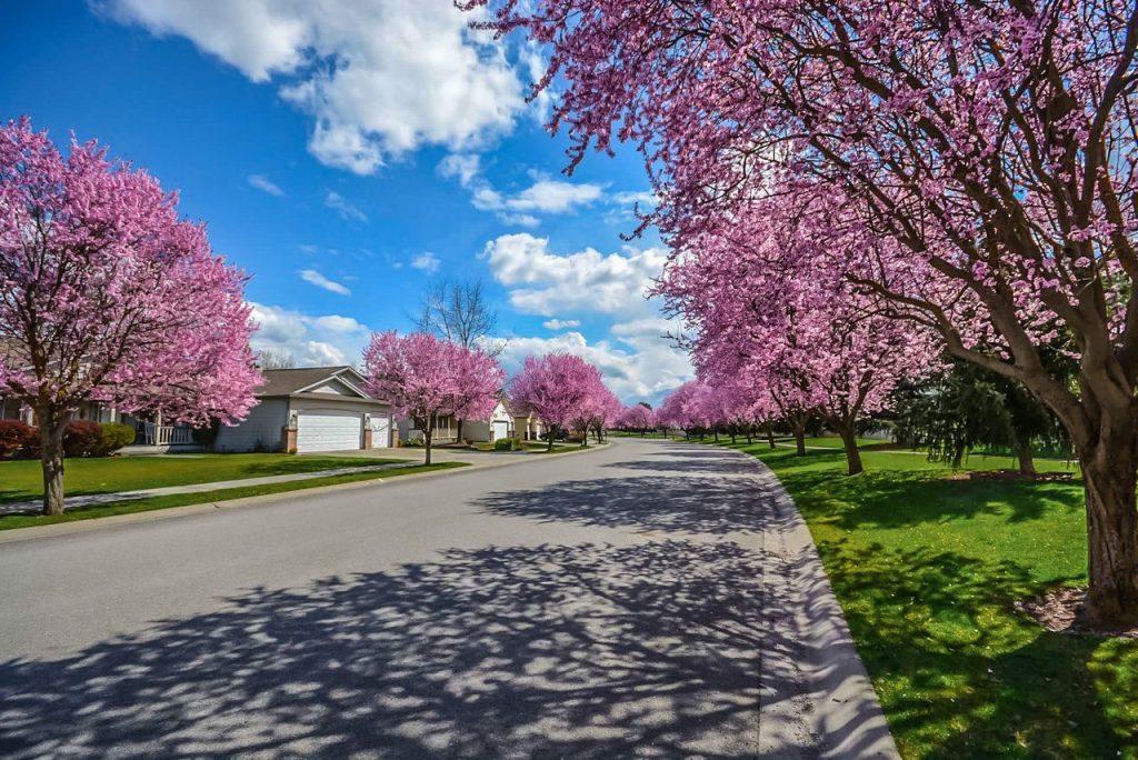 Smyrna Home Insurance