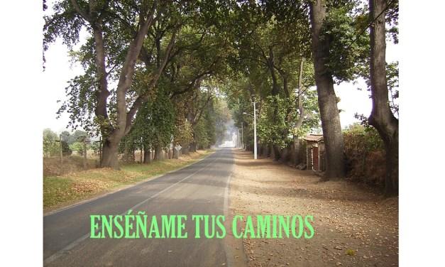DOMINGO 26 DURANTE EL AÑO