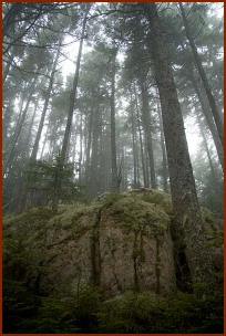 ForestFog, Copyright ©2007, Troy B.Thompson
