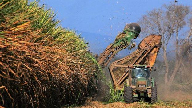 ¿Caña de azúcar en lugar de selva amazónica?