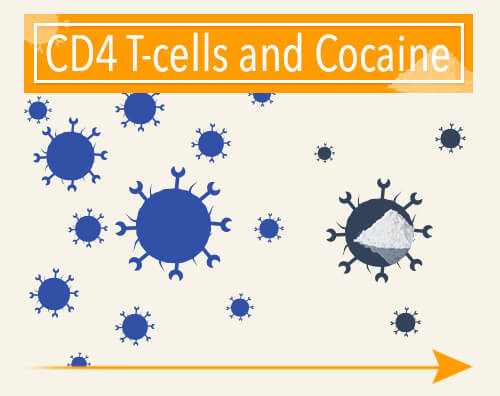 t-cells and cocaine