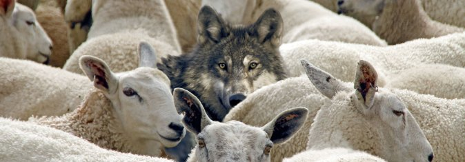 Sheep Among Wolves - American Anglican Council