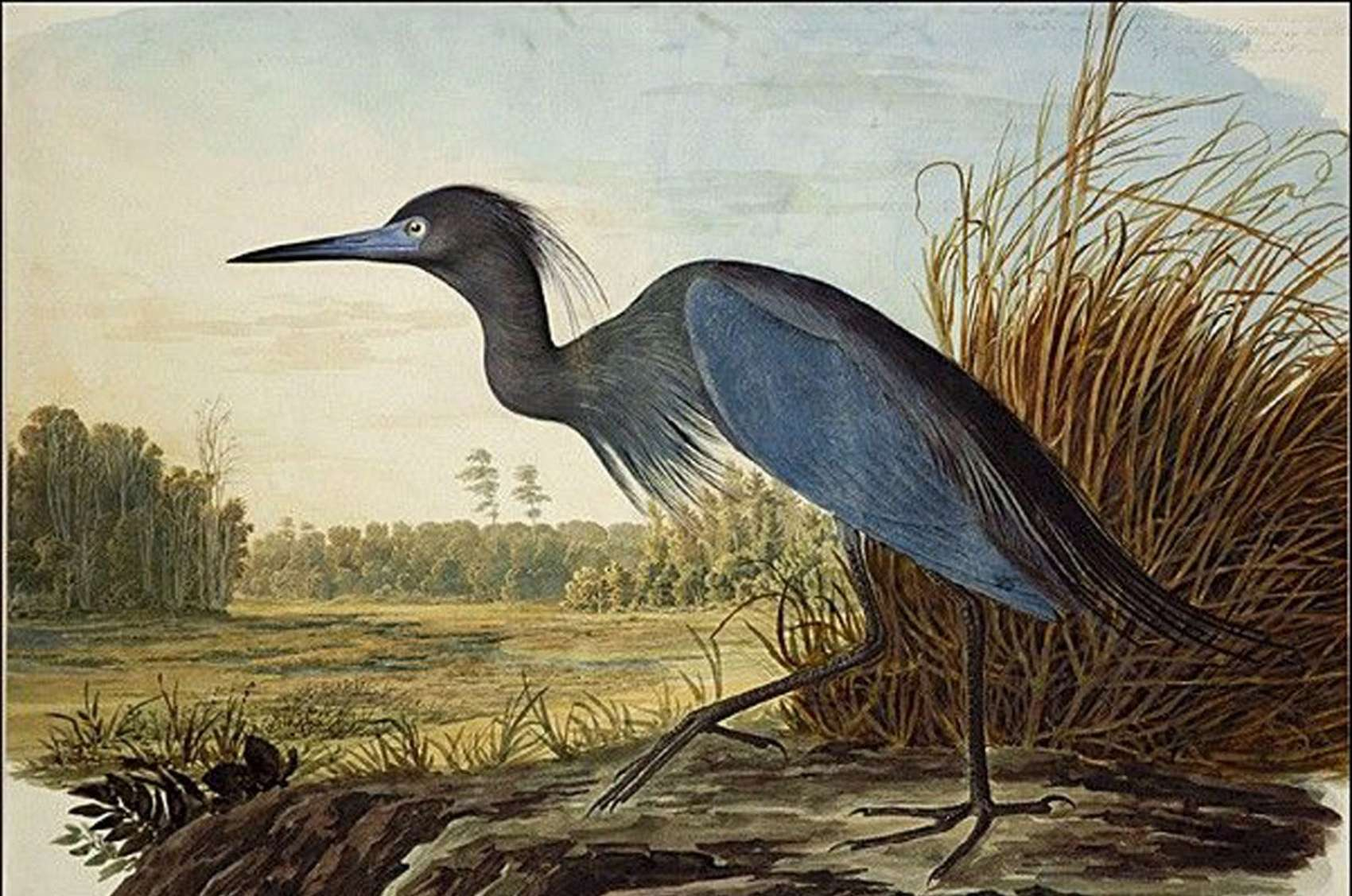 John James Audubon American Art