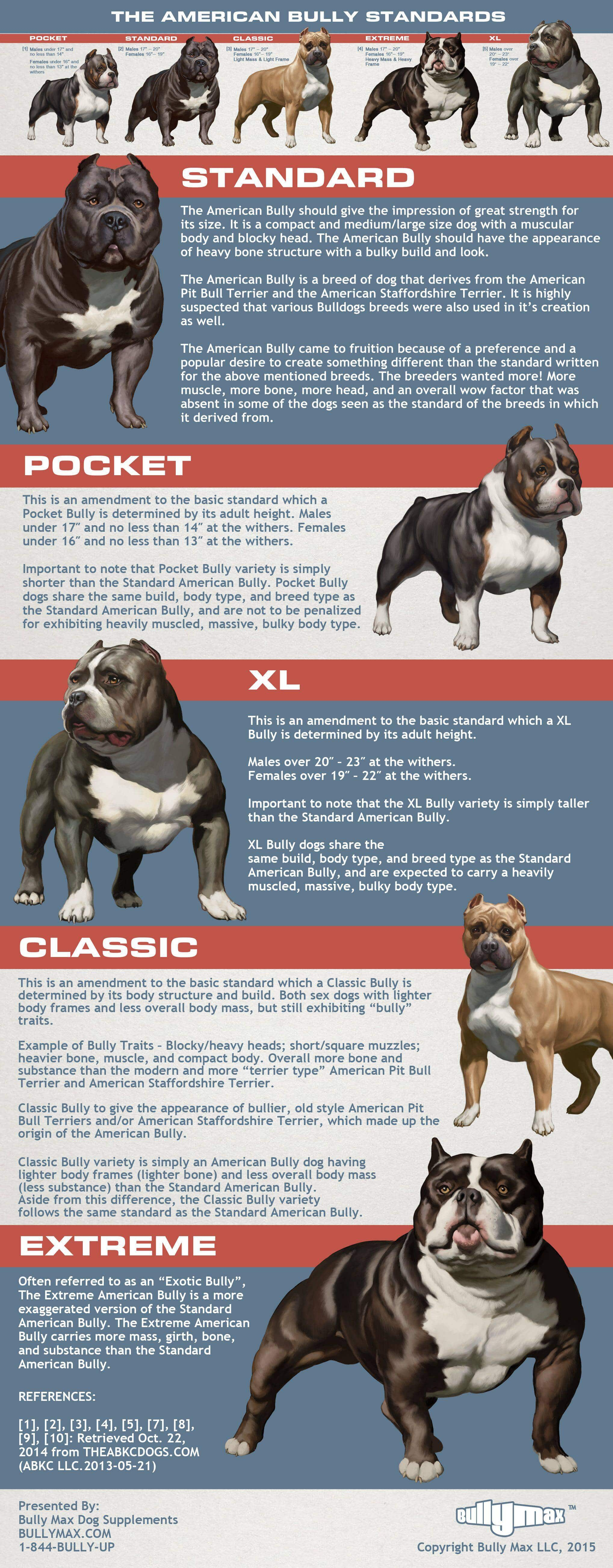 Different Kinds Pit Bull Breeds