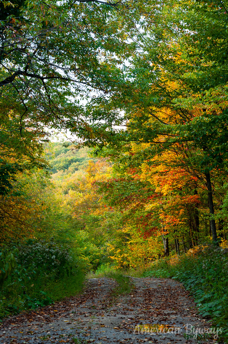 Forest Road 70