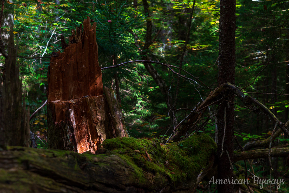 Decaying Tree