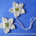 blackberry_flowers-blog_small2