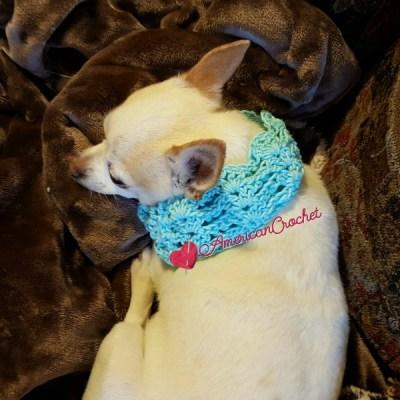 Vintage Lace Dog Collar