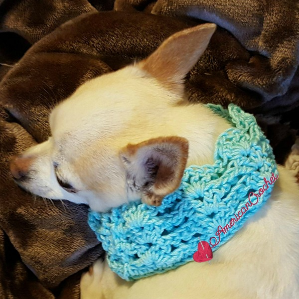 Vintage Lace Dog Collar | Free Crochet Pattern | American Crochet @americancrochet.com #freecrochetpattern