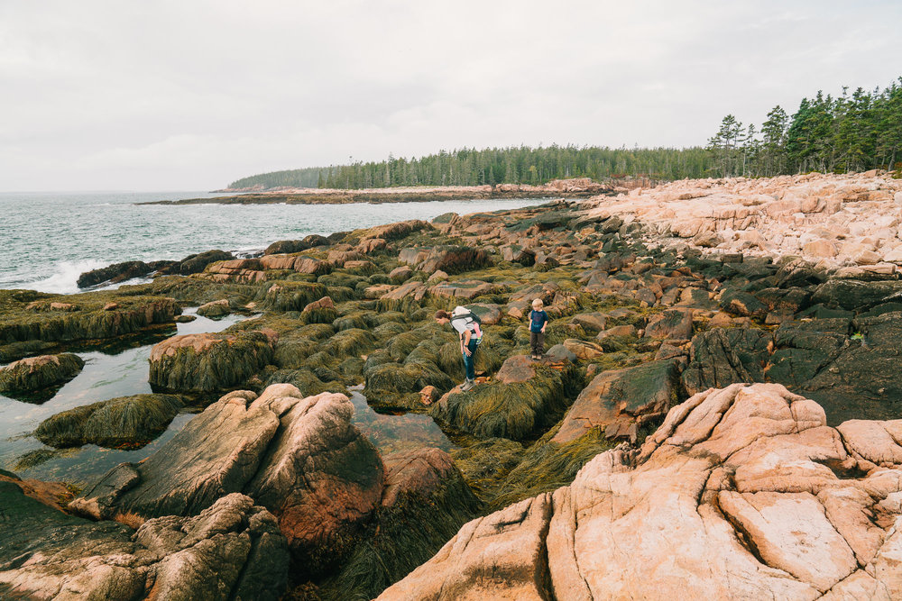 mom and kids looking in tide pools on maine coast