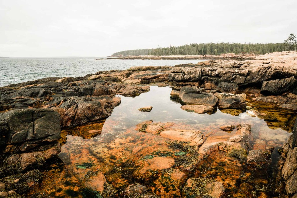 a tide pool on a cloudy day in acadia national park