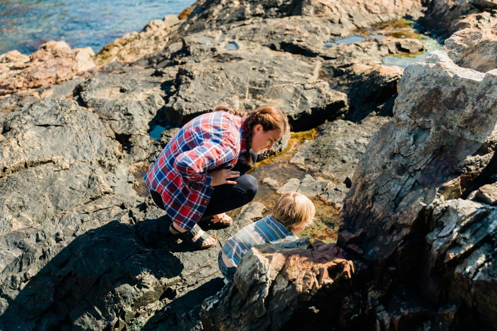 a family with kids looking at a tidepool in acadia national park