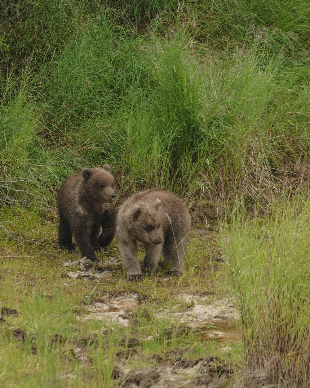 Spring cubs. So cute. I die.