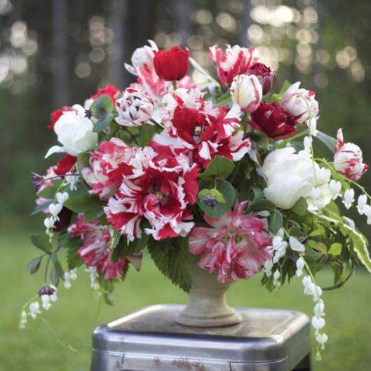 The red and white tulip bouquet, designed by Alicia Schwede from her own cutting garden flowers.