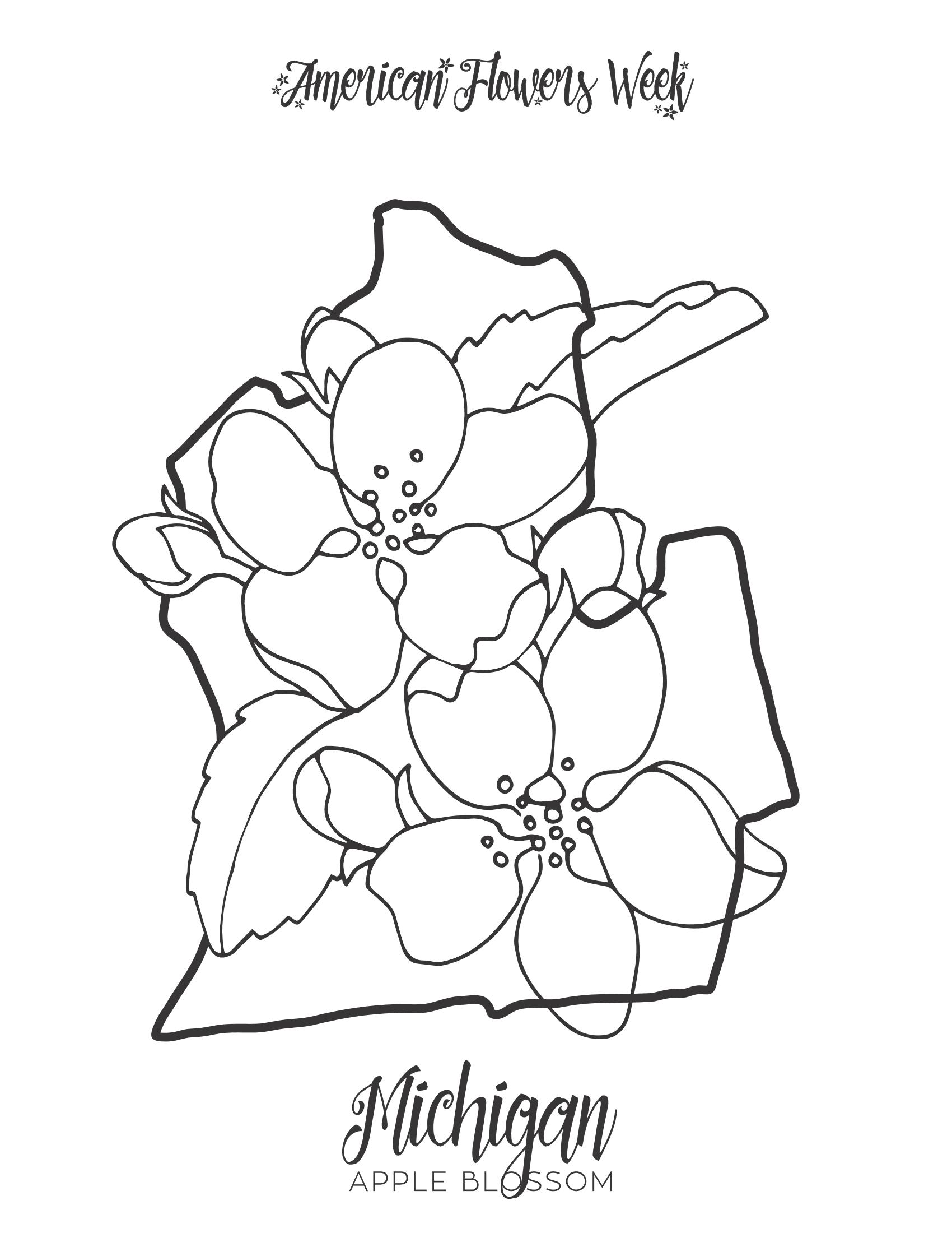 50 State Flowers — Free Coloring Pages | american flowers week