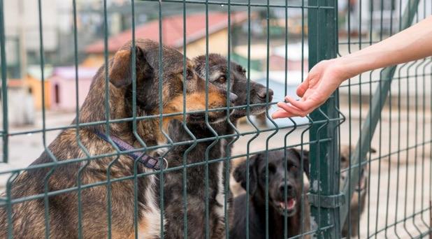 Si decides adoptar un perro como mascota, ayudas a erradicar el maltrato de quienes comercializan con ellos