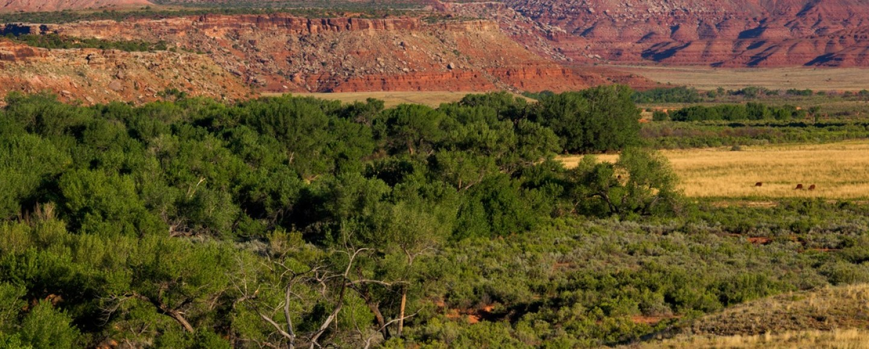 protecting-native-lands-bears-ears