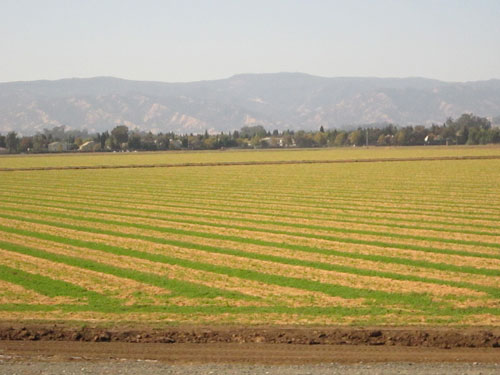 farm field bounded by a distant ridge (author photo)