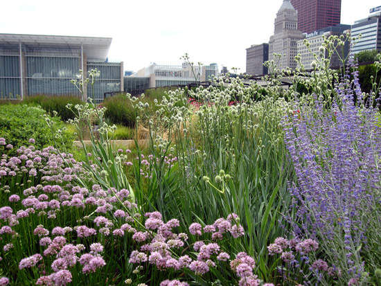 Lurie Garden plants with Art Institute in the background (Credit: Susan Barsy)