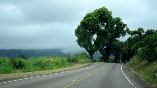 Massive trees, including banana, towered over the road.