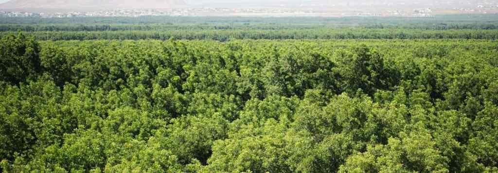 Pecan Tree Farm - American Pecan Council