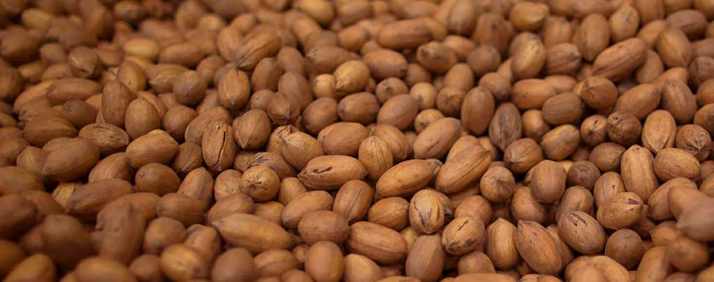 American pecan nuts whole shells
