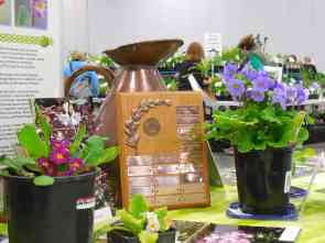 Dorothy Dickson Award trophy flanked by old Barnhave Poly and P. obconica