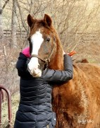 1-saddlebred-snuggle