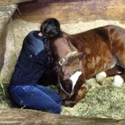1-saddlebreds-love-to-snuggle
