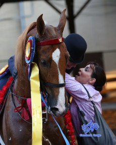 9-saddlebred-love