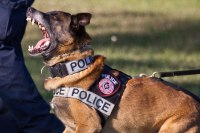 Mississippi Police Officer Allows K-9 to Maul Mans ...