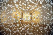 A piece by Cornelia Parker - artcity15-galleries - The permanent collection galleries at the Milwaukee Art Museum have been completely revamped. Wednesday, November 10, 2015.  - Photo by Mike De Sisti / MDESISTI@JOURNALSENTINEL.COM