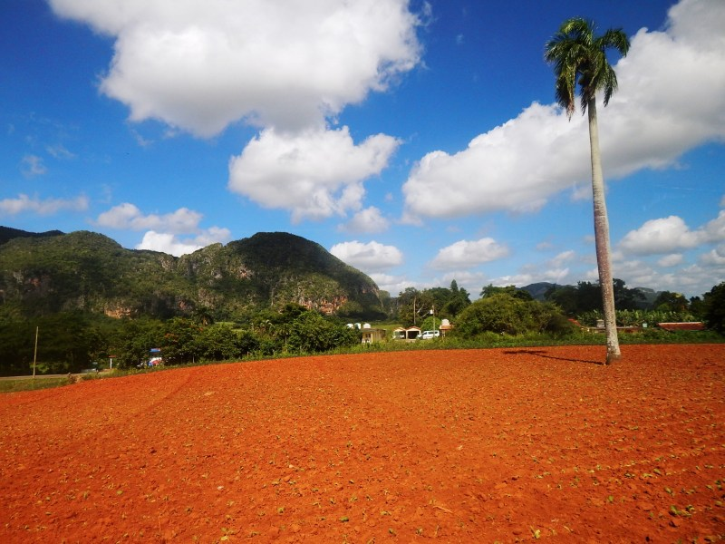 Vinales Valley,tobacco fields and mogotes