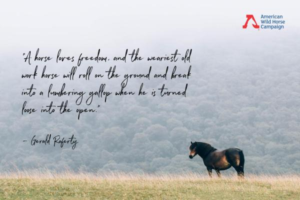 Free Wild Horses Quotes - Year of Clean Water