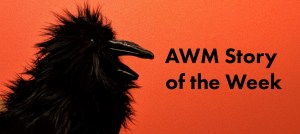 A raven toy on a red background next to the words AWM Story of the Week