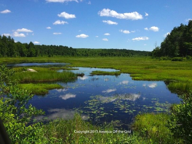 Bass Swamp Warwick MA