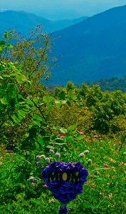 Wintergreen overlook