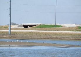 Gulls and new roadway