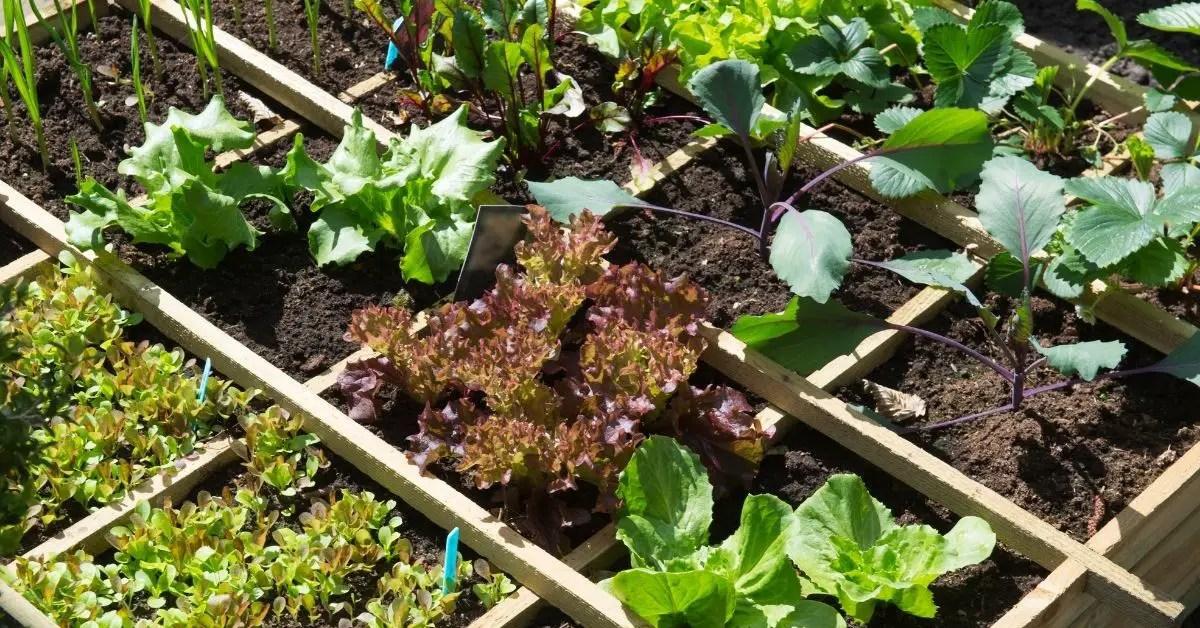 Vegetable Gardening