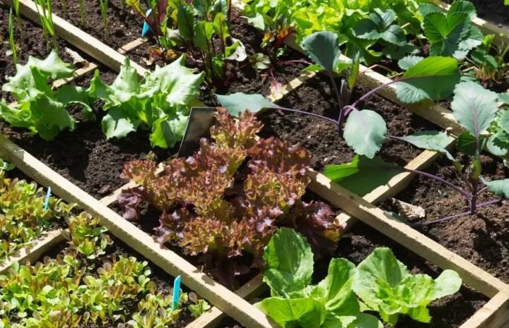 Best ways on Vegetable Gardening For Beginners
