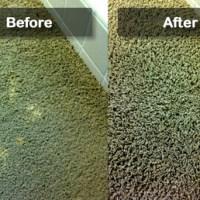 Professional Carpet Dyeing - Carpet Ideas