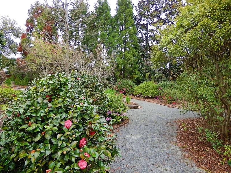 Camellias and Azaleas | Americus Garden Inn near GSW