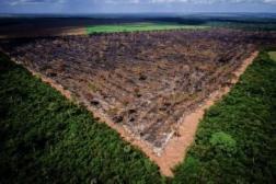 Im Vergleich zum Vorjahr hat die Abholzung im brasilianischen Amzonasgebiet im Juli 2019 um 278 Prozent zugenommen