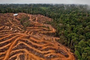 2018 sind in Lateinamerika zwei Millionen Hektar Regenwald abgeholzt worden