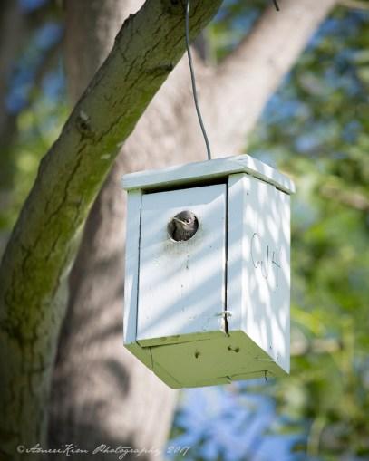 BabyBluebirdsf