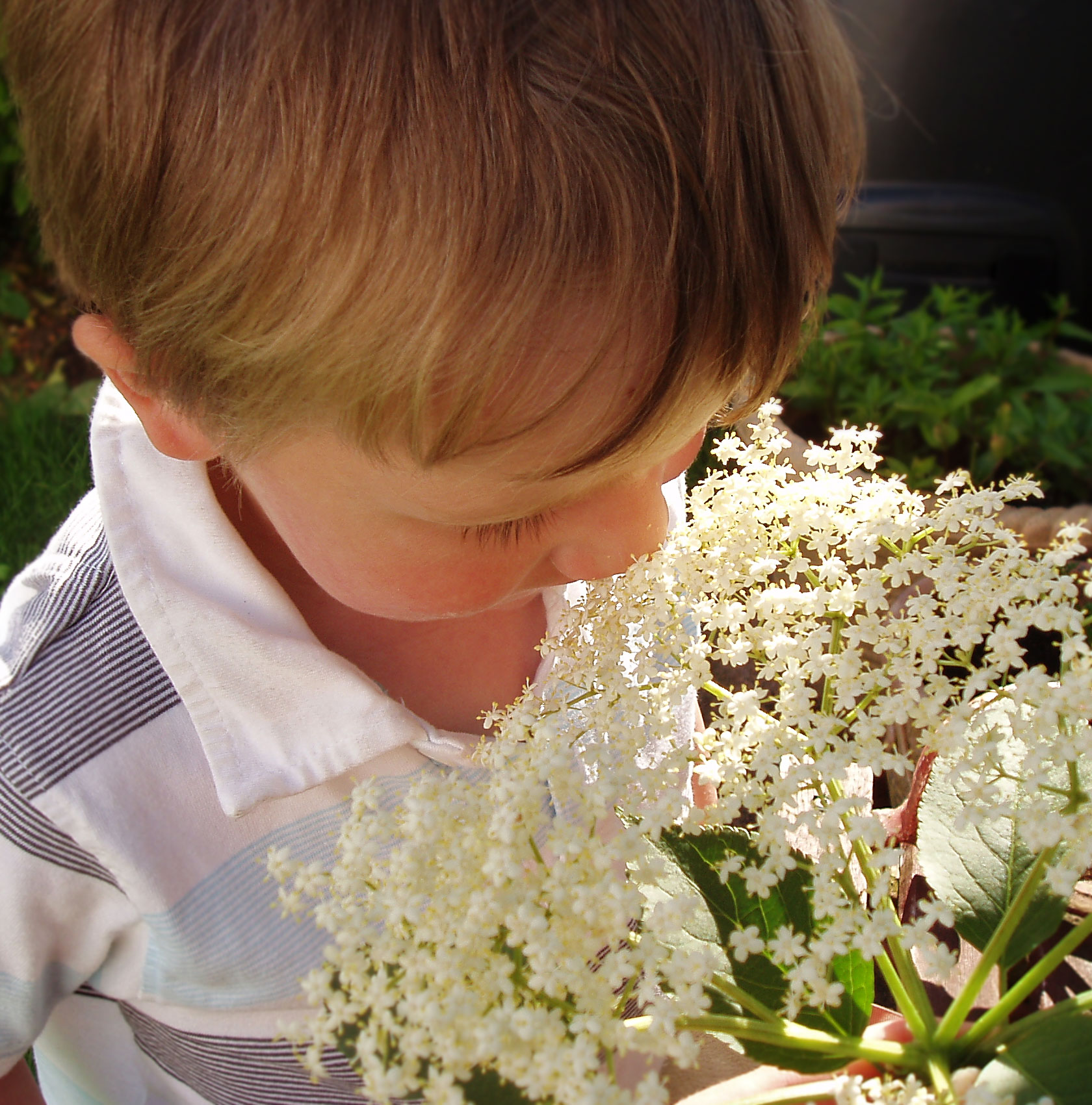 T smelling elderflowers