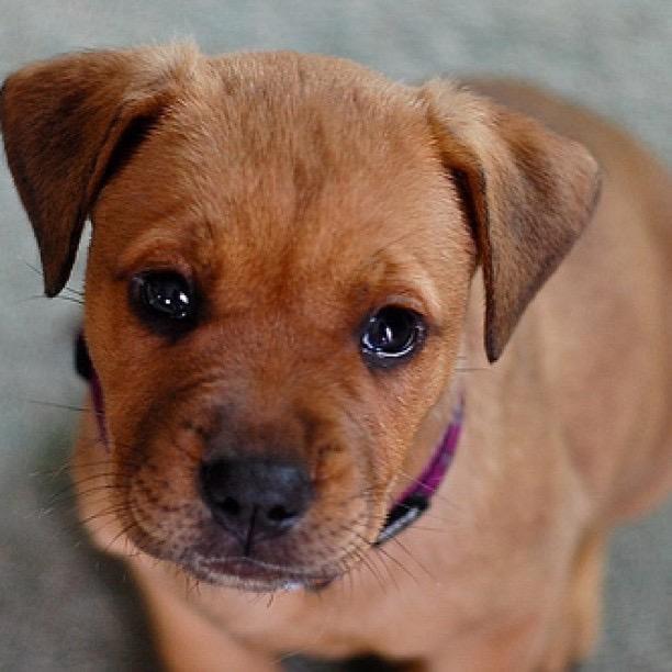 juju the dog as puppy